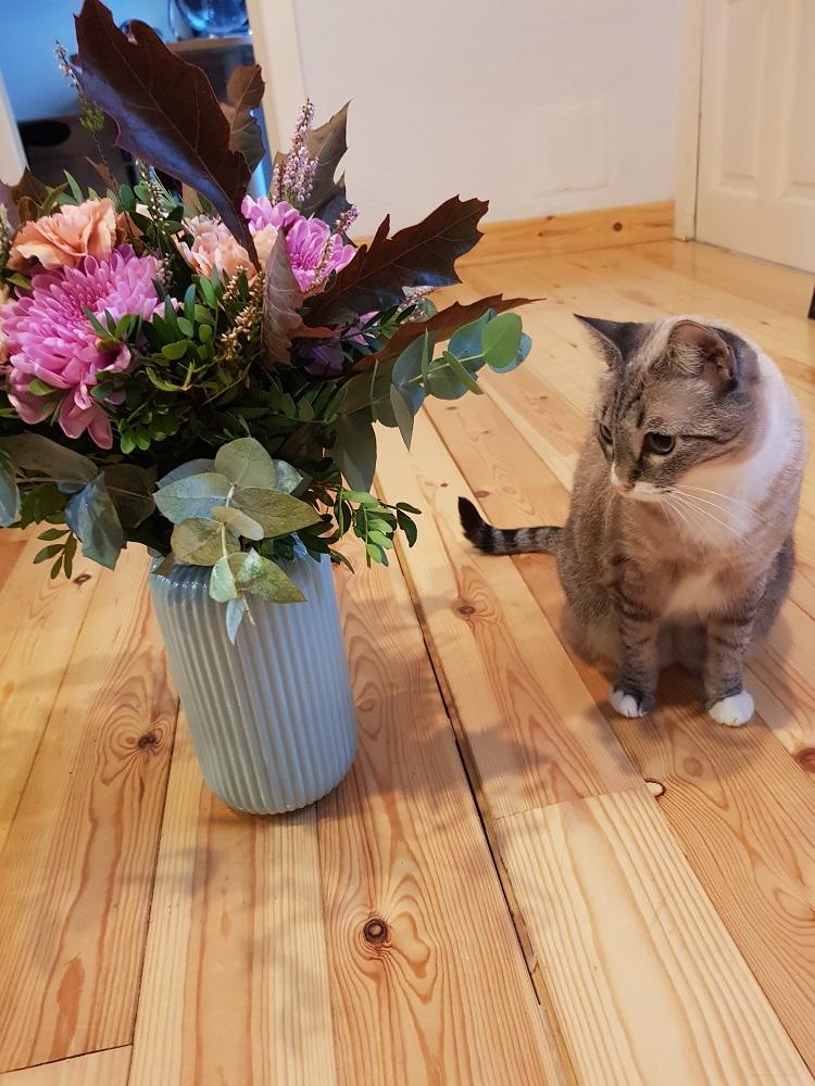 día mundial de los animales gatito