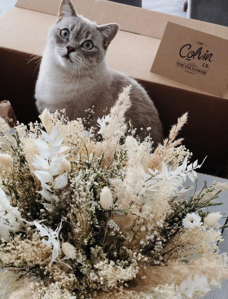 día mundial de los animales gato