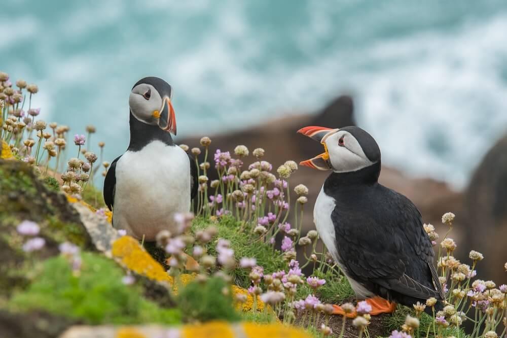 Juntamos animales y flores por el día mundial de los animales