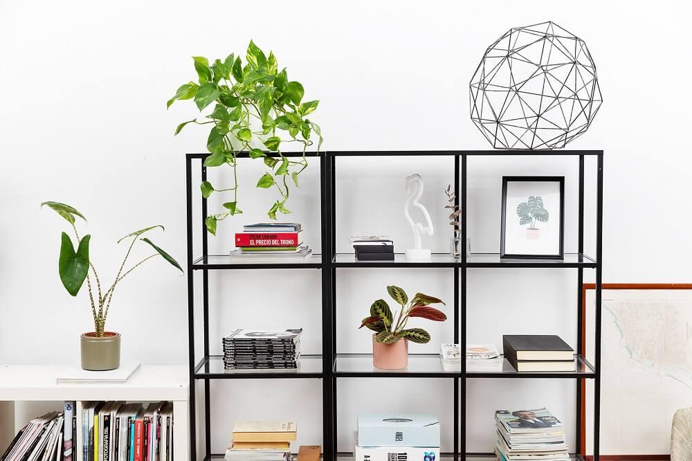 plantas en casa estantería