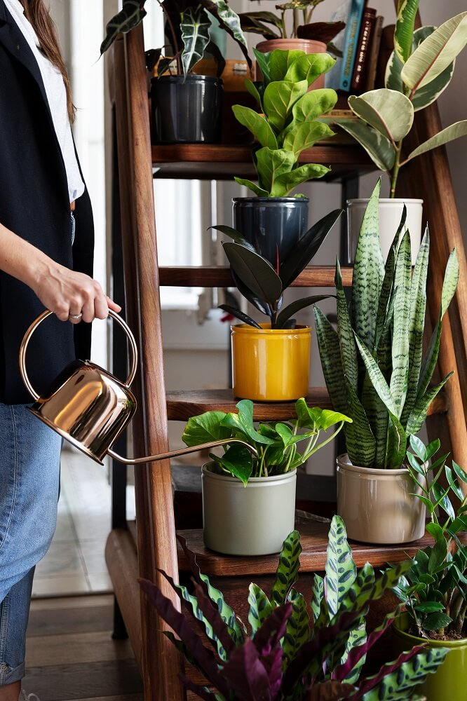 Cuidados plantas en escalera