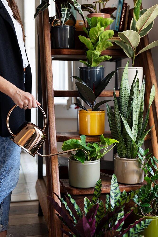 Plantas en casa en escalera