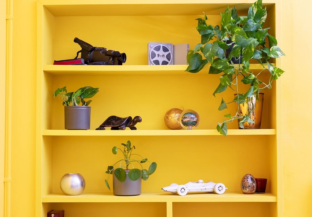 Beneficios de tener plantas en casa junto a flores frescas