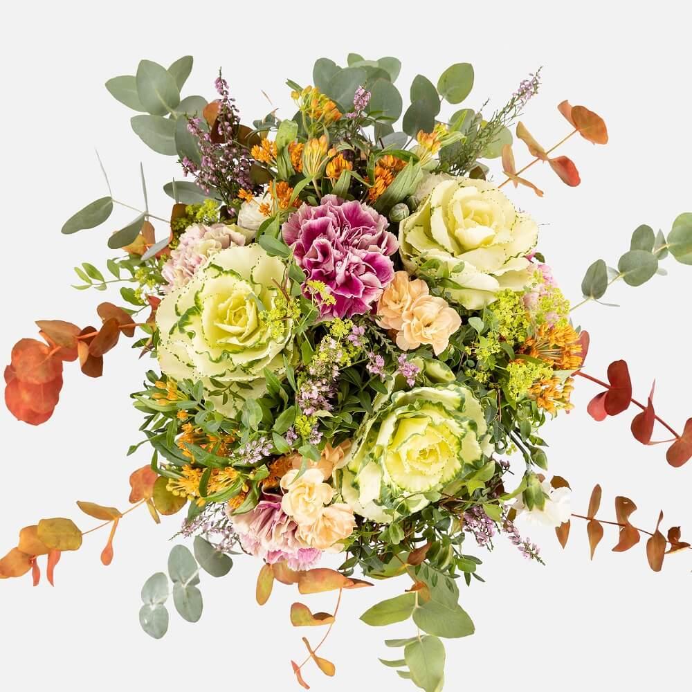 Las Asclepias Curassavica una maravilla hecha flores