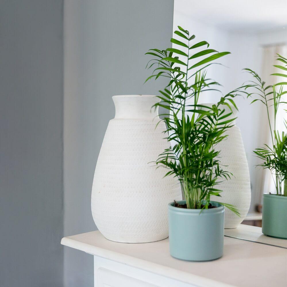 planta no tóxica parlor palm