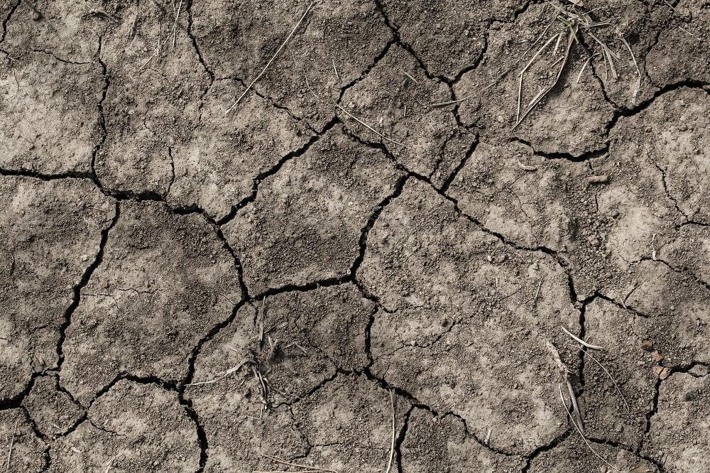 Día internacional del suelo