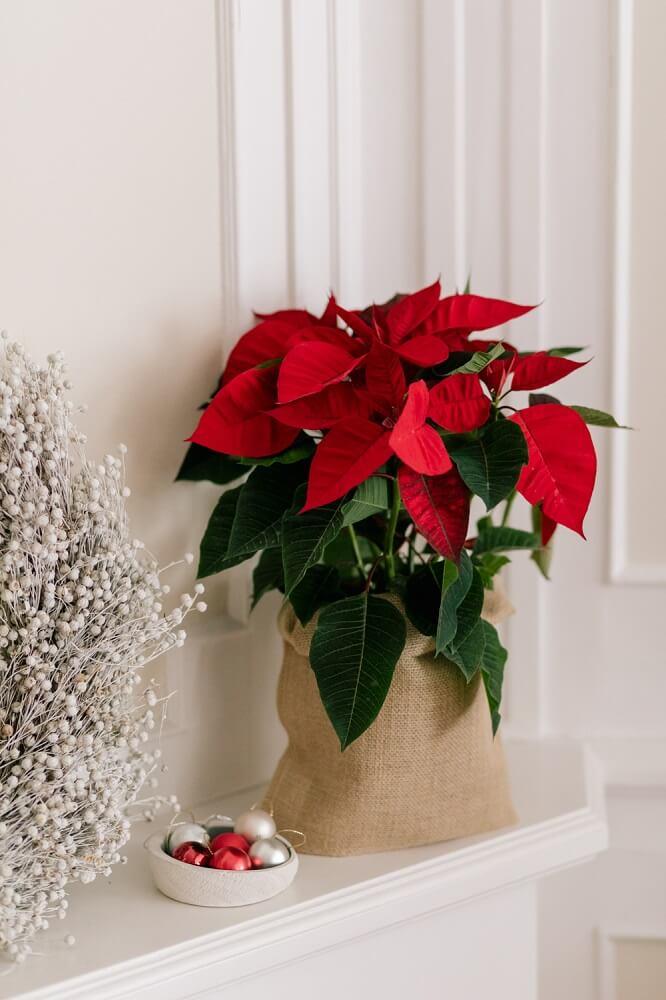 Decoración con planta de navidad