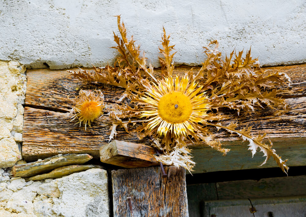 La leyenda de la flor eguzkilore