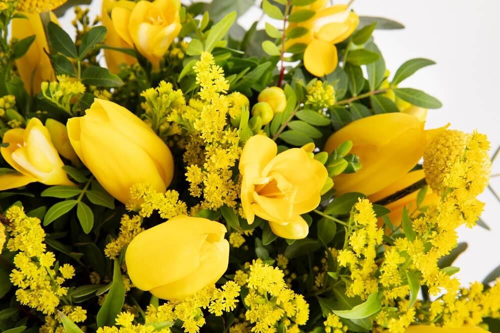 Colecciones de tulipanes que enamoran