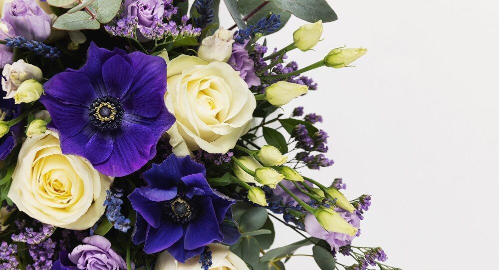 5 flores de invierno que tienes que conocer
