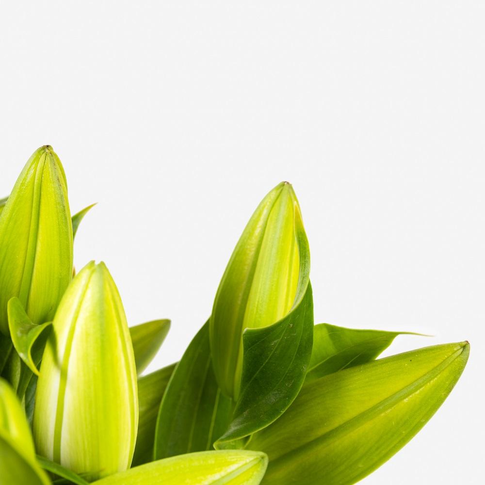 Trucos para que las flores abran un poco más rápido