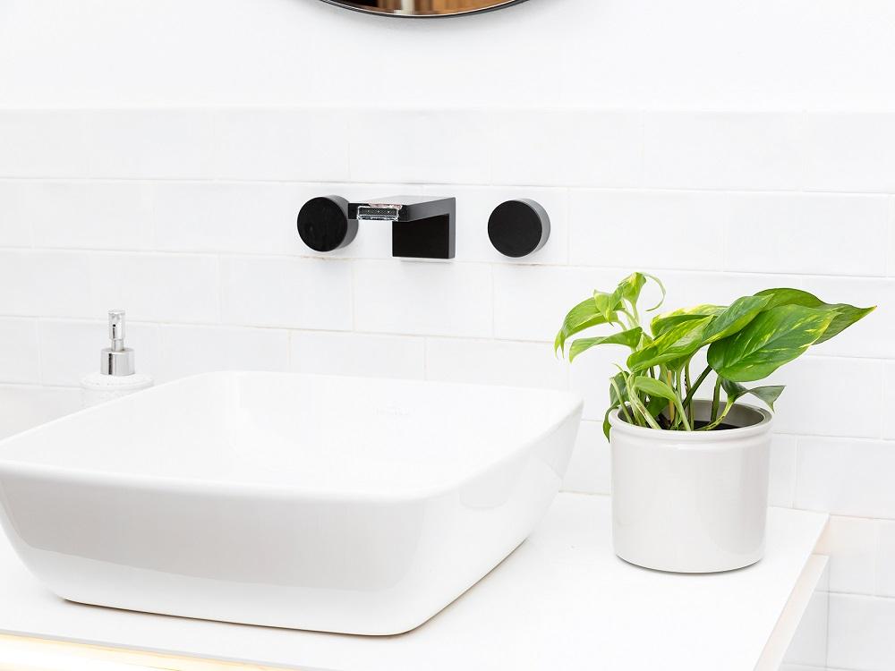 plantas para el baño pothos