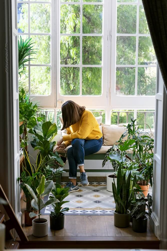Cómo cuidar plantas de interior: 5 errores que debes evitar