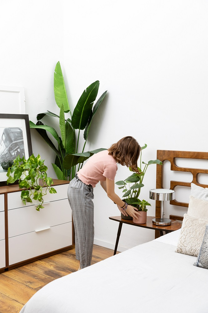plantas de interior en dormitorio