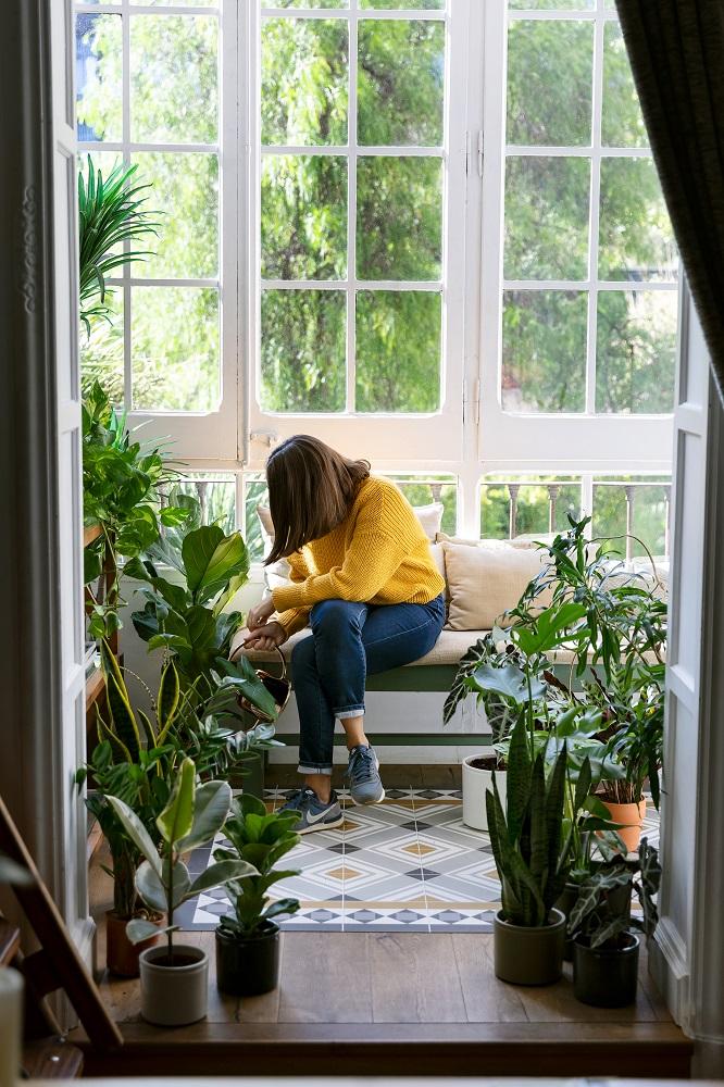 cómo cuidar las plantas en casa