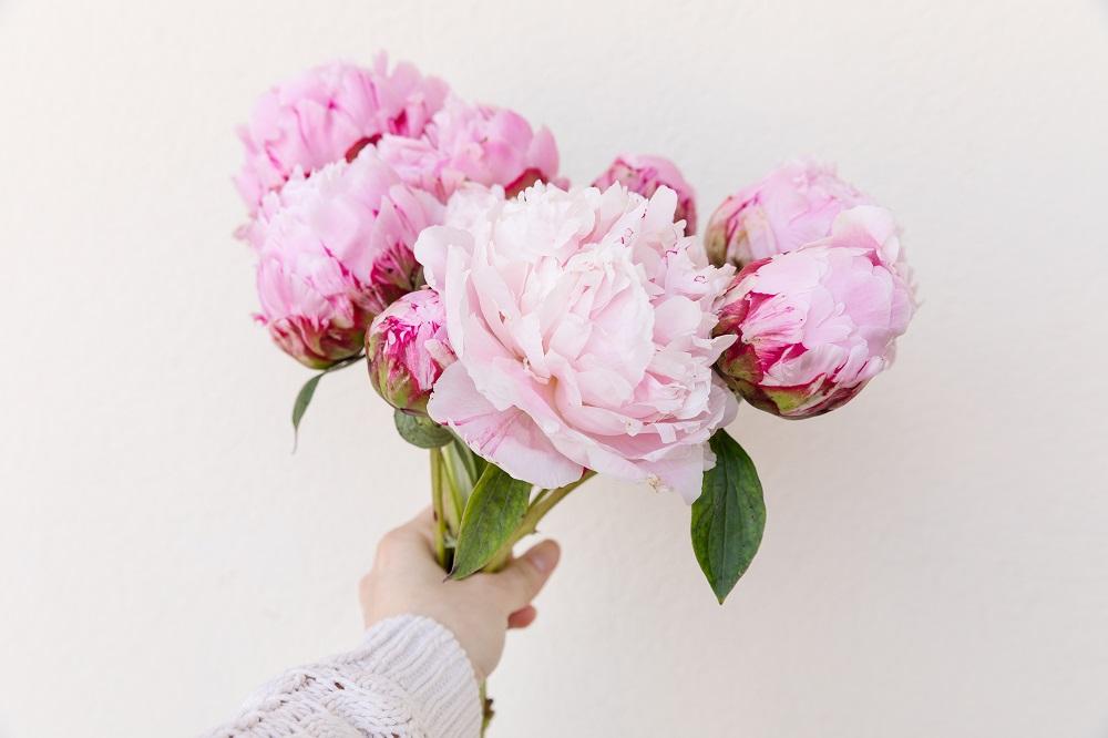 significado de las peonías rosas