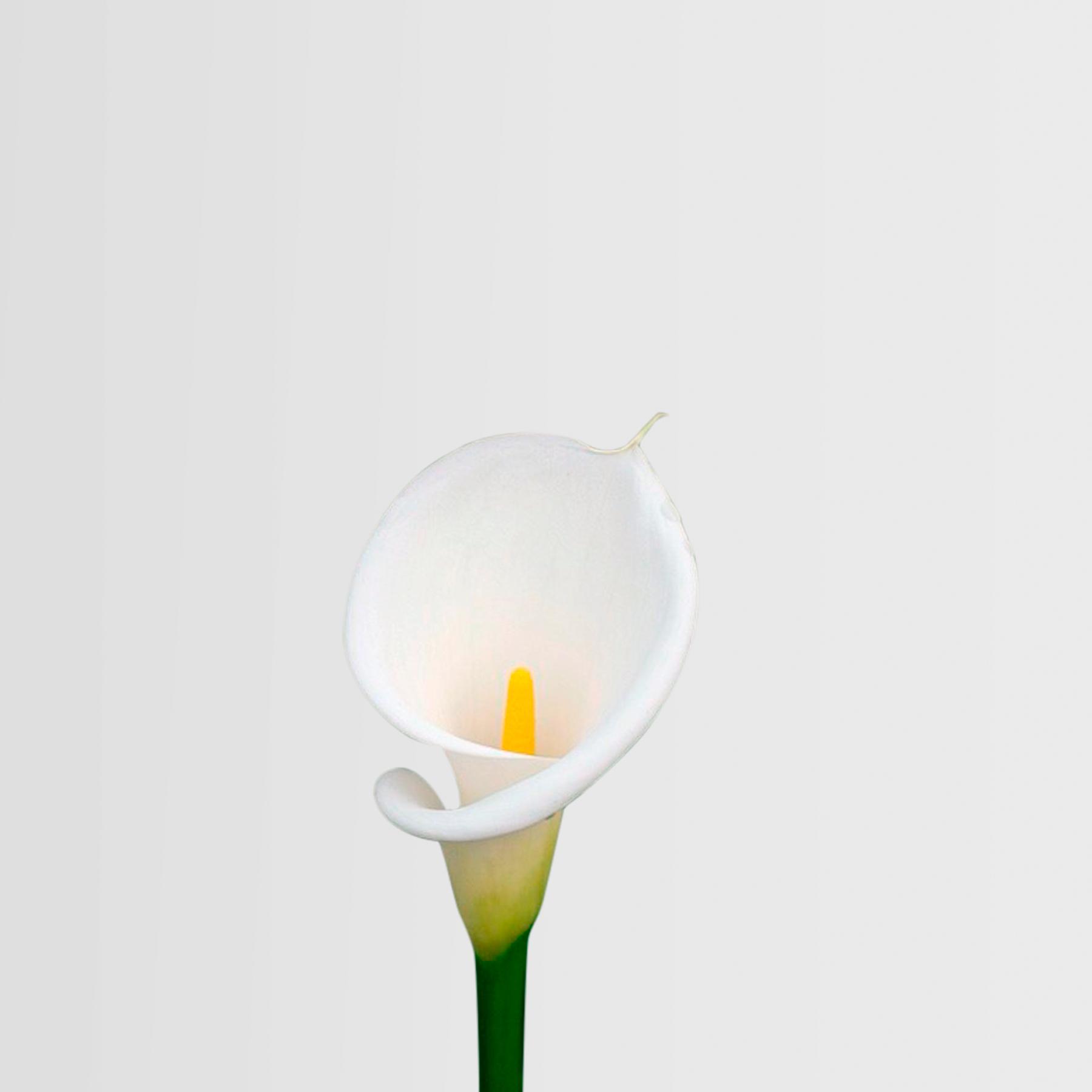 flores dia de la madre cala