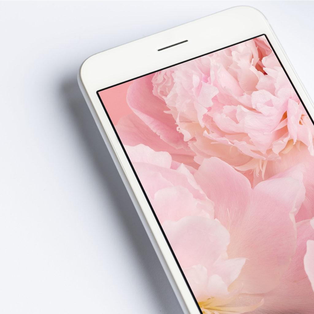 Peonías: Fondos de pantalla descargables para tu móvil