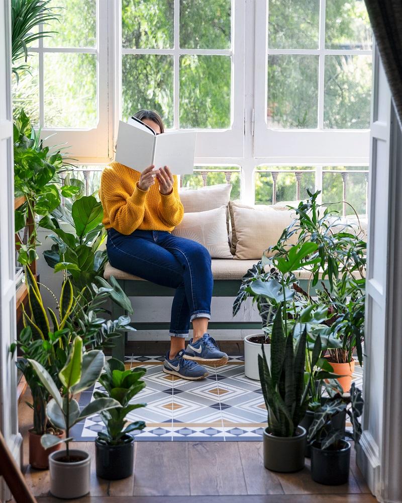 Plantas de poco riego – A ellas las puedes dejar solas en verano