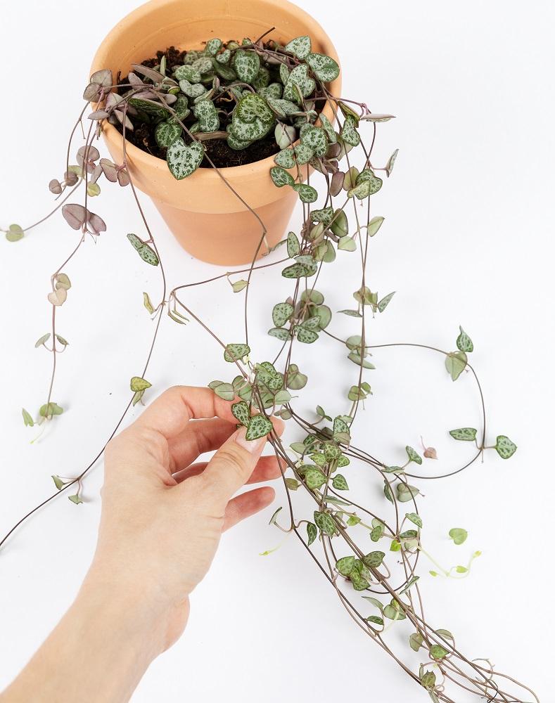 unboxing planta bonita