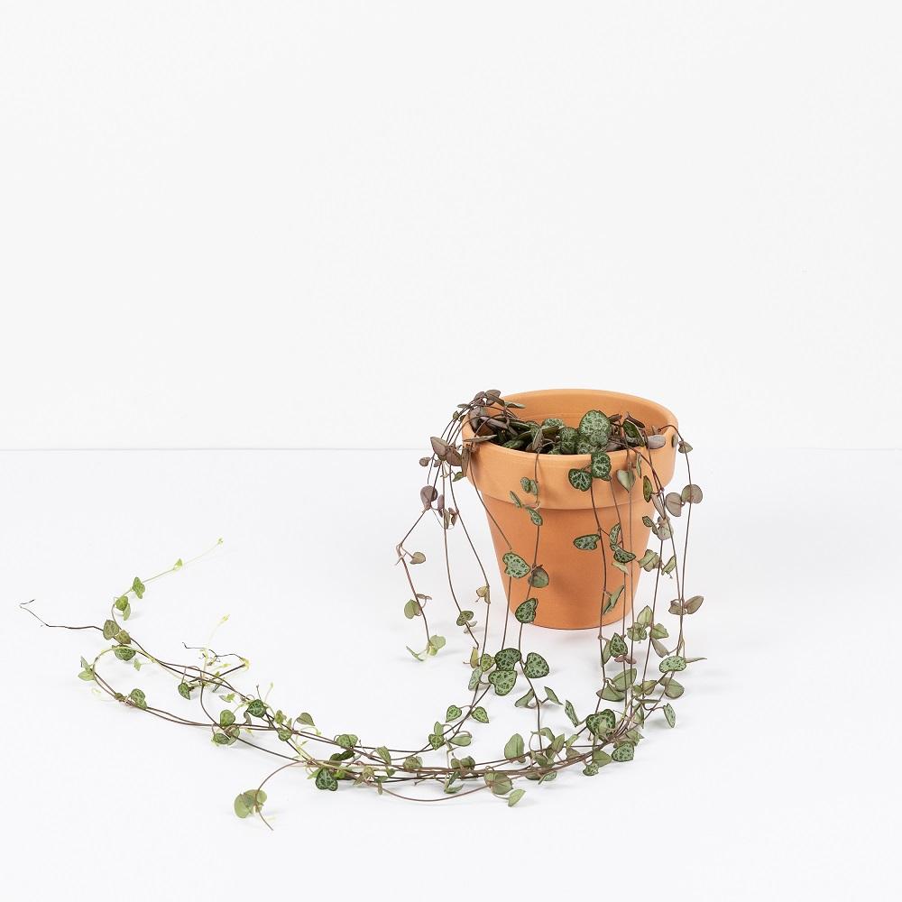 Unboxing paso a paso de las plantas de verano