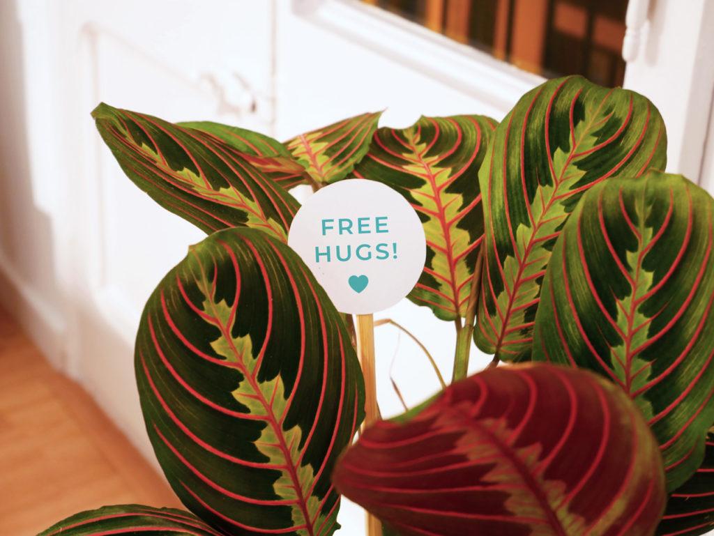 ¡Nuevas etiquetas para plantas!