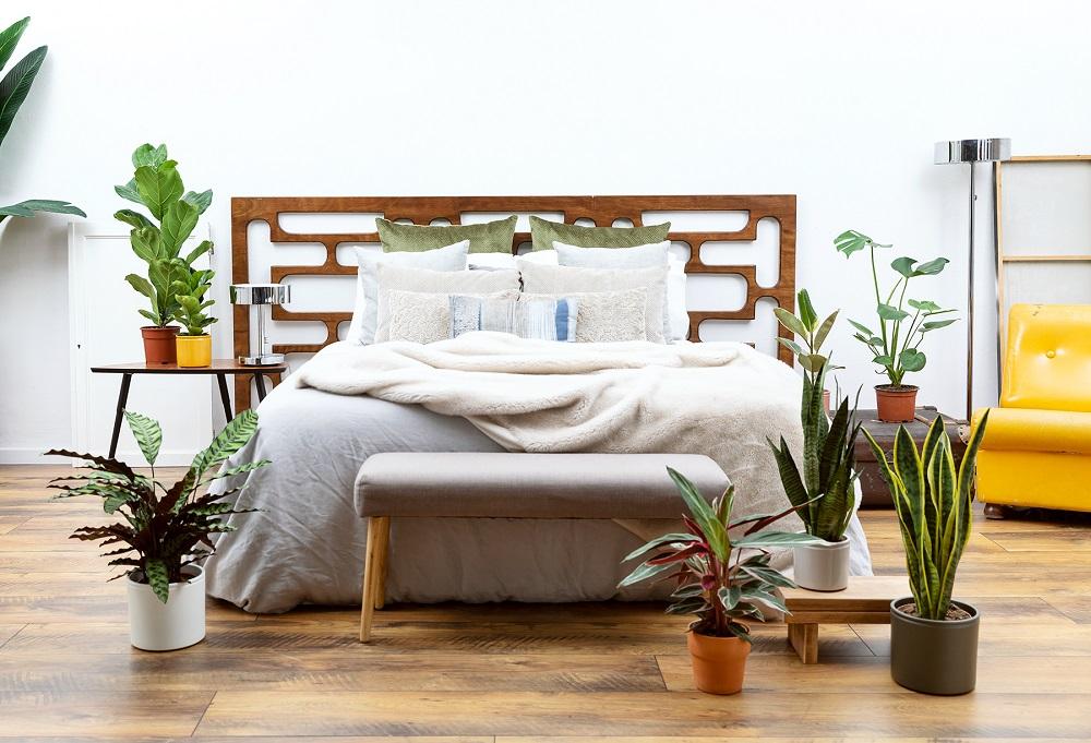 plantar para el dormitorio