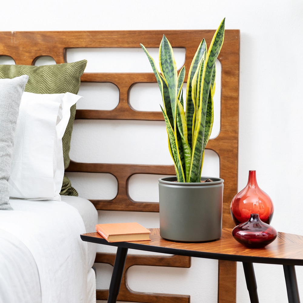 plantas para el dormitorio bonitas