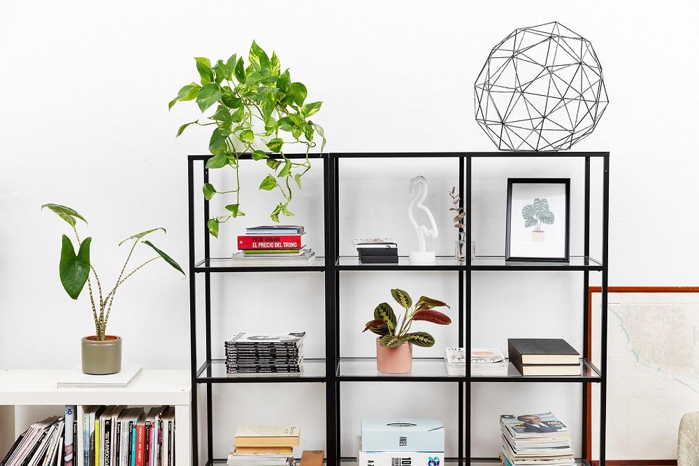 Razones por las que querrás trabajar con plantas