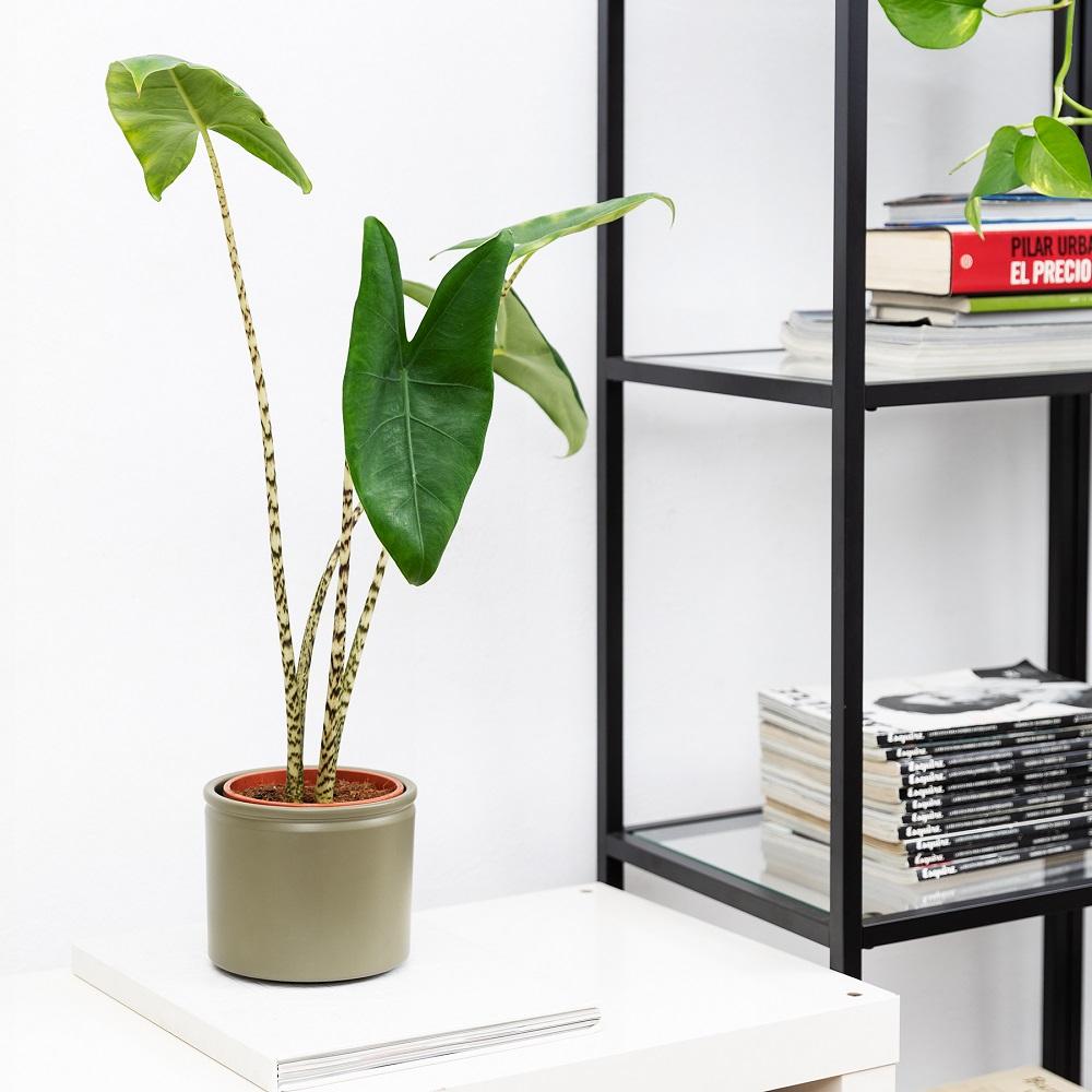 trabajar con plantas alrededor