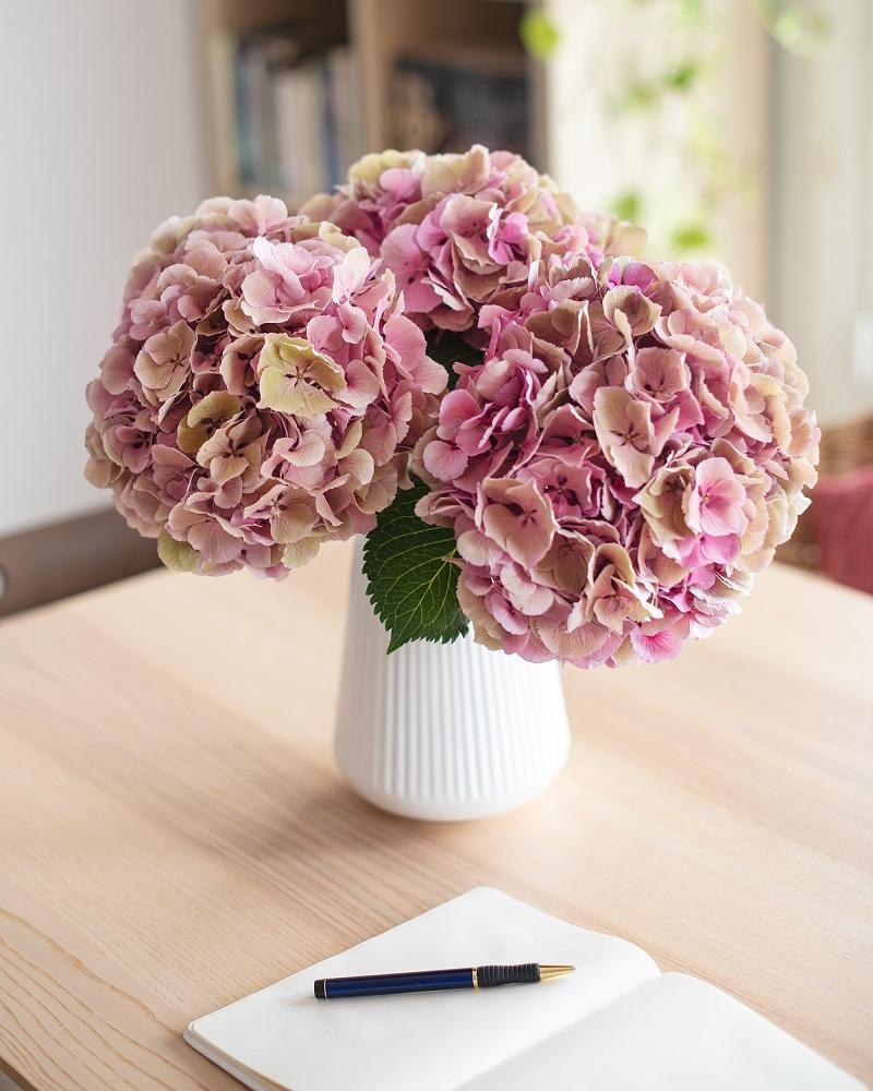 hortensias antique en ramo Bubble Pink