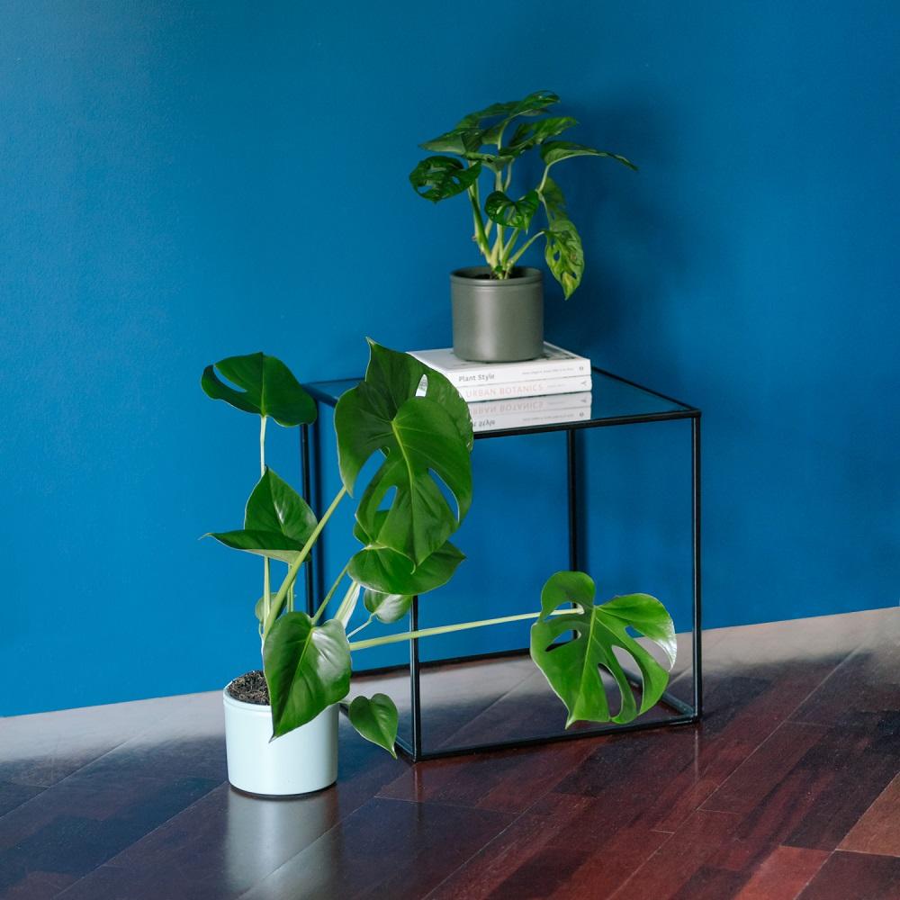 Hablemos de mitos sobre plantas