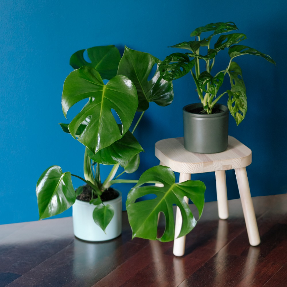 agua para regar plantas