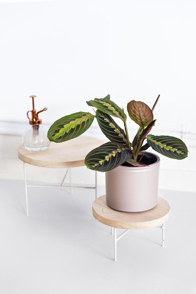 dudas sobre plantas