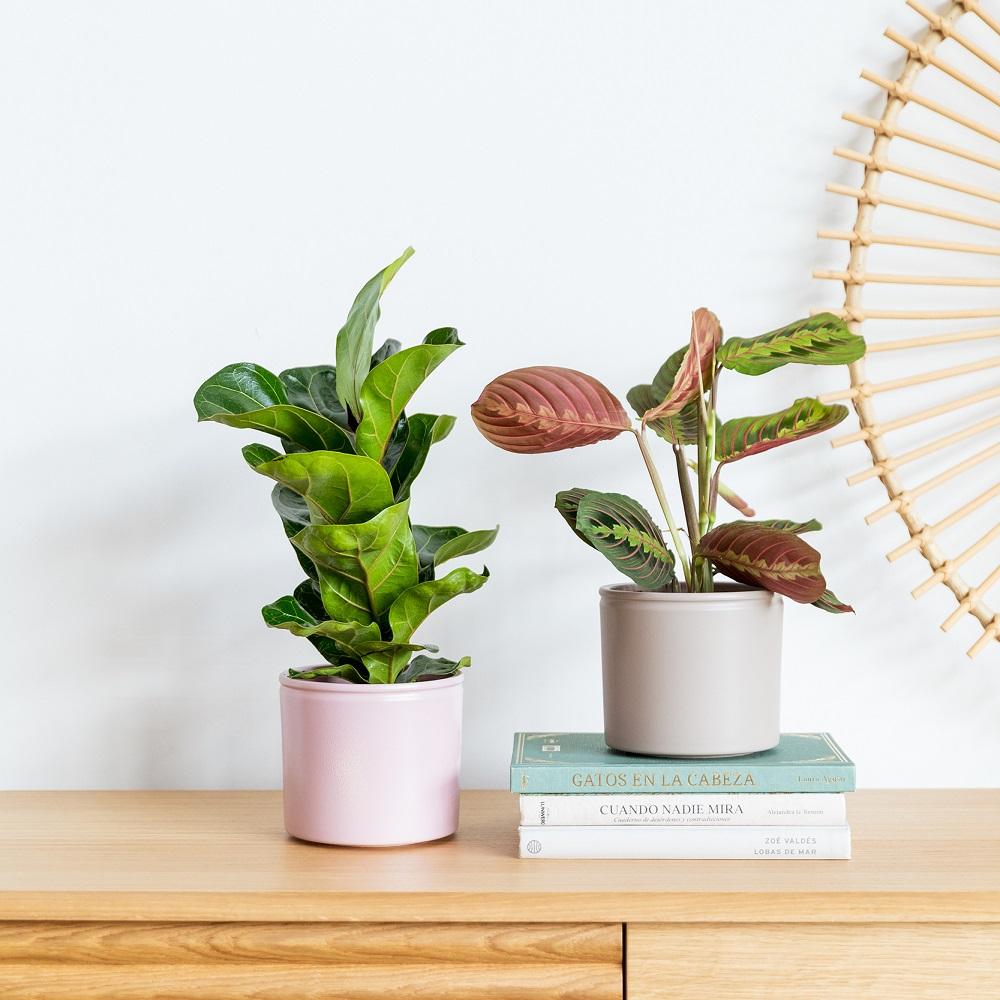 La playlist que tus plantas amarán