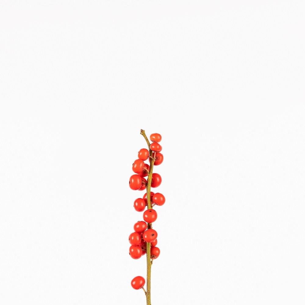 Mimos que necesita el ilex, una de las flores más navideñas