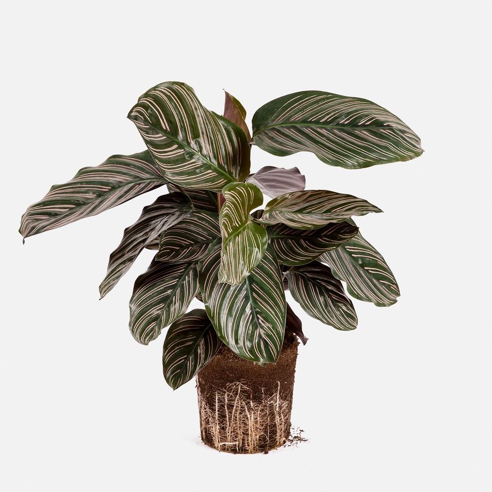 tierra para plantas perfecta