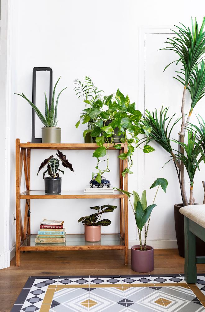 3 pasos para decorar tu salón con plantas de la mano de Kave Home