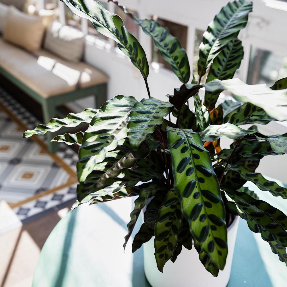 salón con plantas Colvin