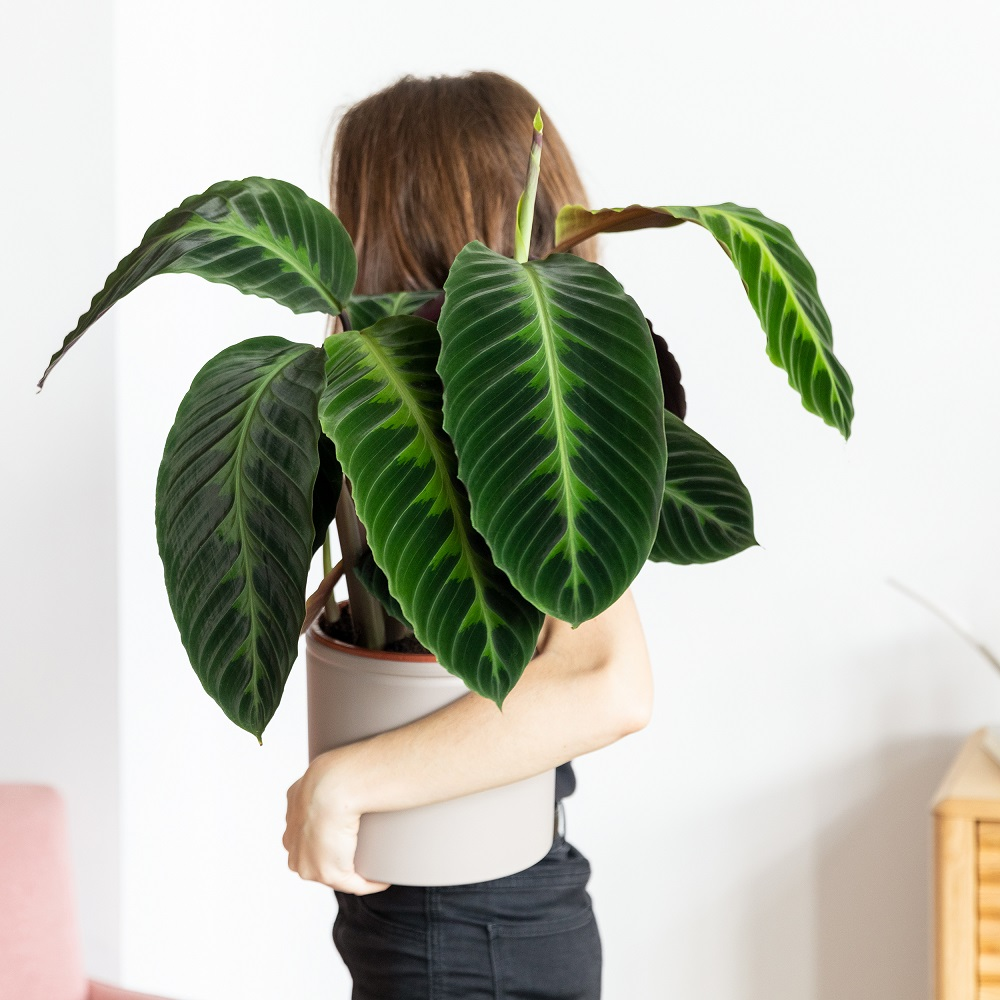 ¿Tienes curiosidad por saber qué planta eres?