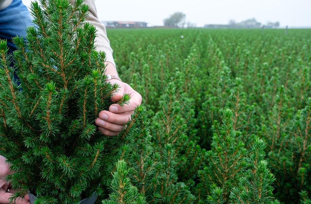 Los agricultores que se esconden detrás de las flores y plantas de Navidad