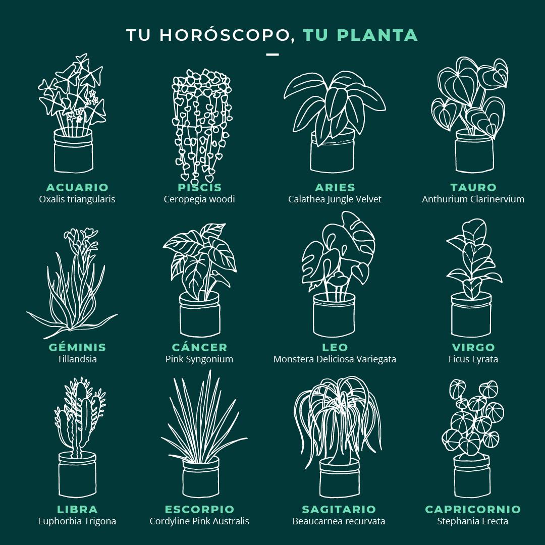 plantas según tu signo