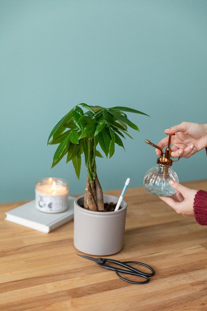 plantas de invierno riego