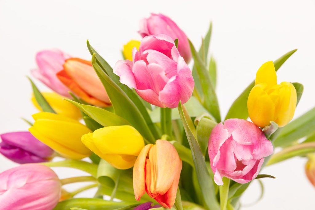 Descubre la colección de ramos de flores con tulipanes