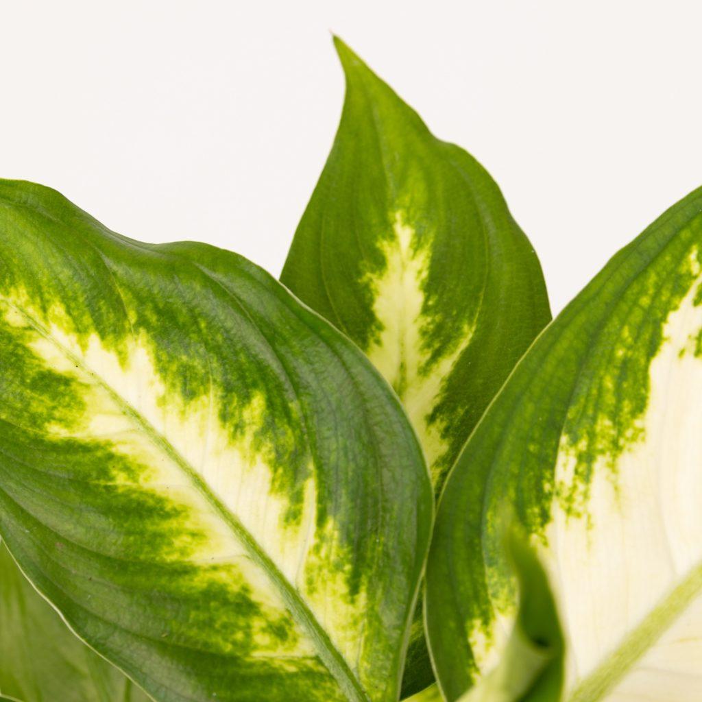 Fáciles de cuidar y de temporada. Ya está aquí nuestra colección de plantas de primavera