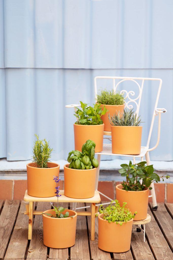 Las mejores plantas aromáticas para decorar cualquier espacio