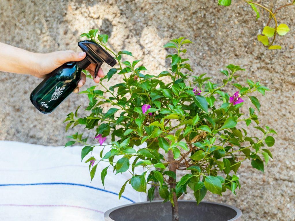 Jabón potásico: ¡bye bye a las plagas en tus plantas!