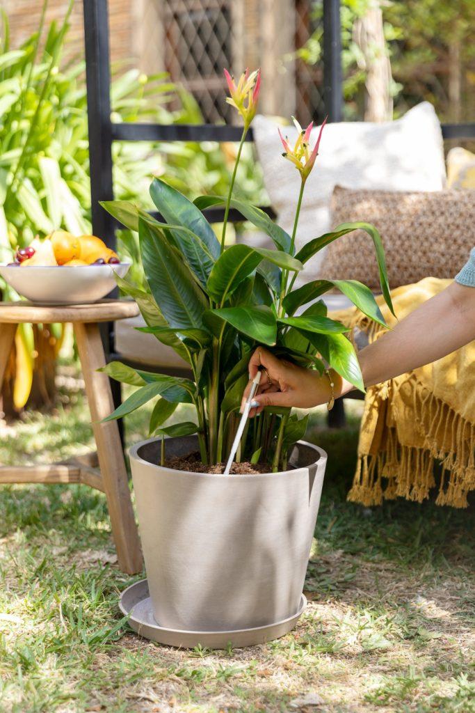 ¿Hojas amarillas en tu planta? Tenemos la solución