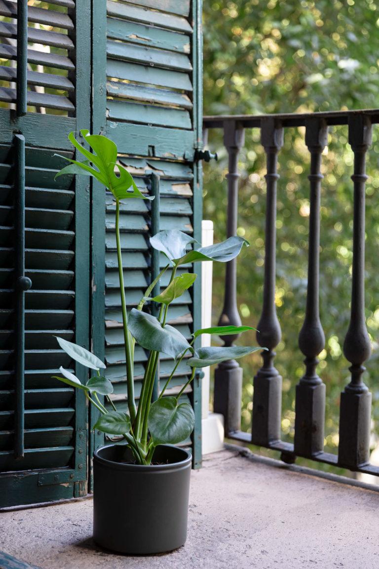 Planta de interior en ventana