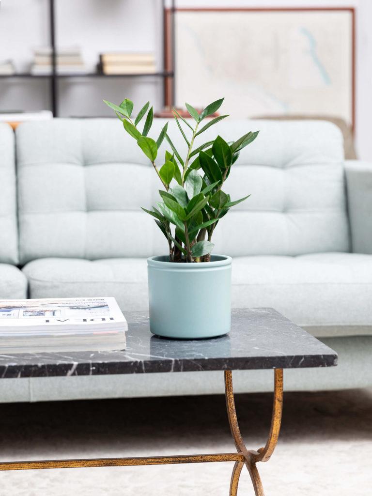 Planta de interior en sala